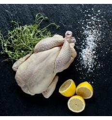 Hopballe Mølle - Kylling 2000–2200 gram – Frost