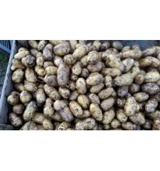 Ditta Kartofler fra Karl Henning i Brande. SOLSKIN