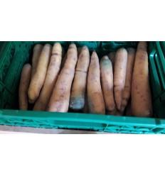 Gule gulerødder