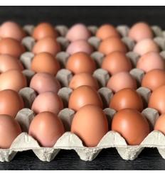 TILBUD: 30 stk. ØKOLOGISKE græs-æg fra Kokærgård