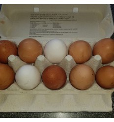 10 æg fra frilandshøns, rettrup kær friland