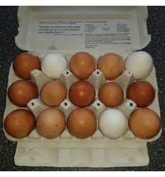15 friske æg fra frilandshøns, Rettrup Kær Friland