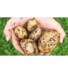 1,5 kg Belinda Kartofler