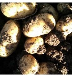 1 kg kartofler, Sava. SOLSKIN